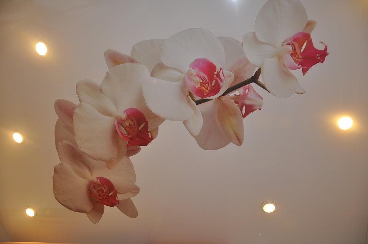 Потолок с цветами #7